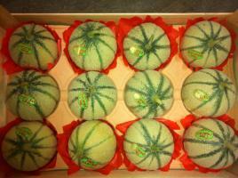 melon pere pascal